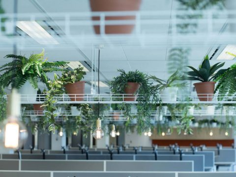 advantages of plants in an office environment blog post header